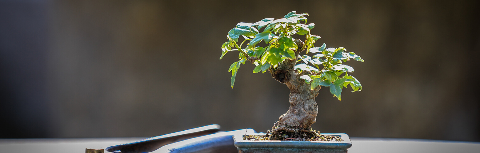 日本デザインプランナー協会 | 盆栽クリエイター資格検定